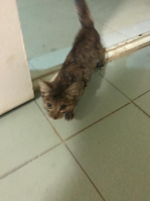Котёнок из Шрека только коричневый!Глаза огромные. Сидит мёрзнет в подъезде, район магазина Соседи. Безумно ласковый и очень голодный!  Приютите беднягу😢  удачного фото не дал сделать. (только What'sApp)