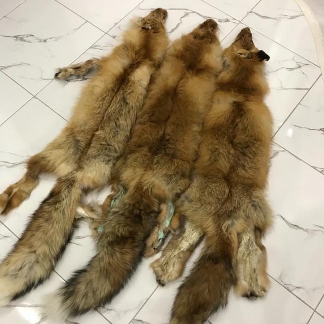 Продаю шкурки рыжей лисицы 🦊 шкурки большие, одна стоит 4000 тыс.