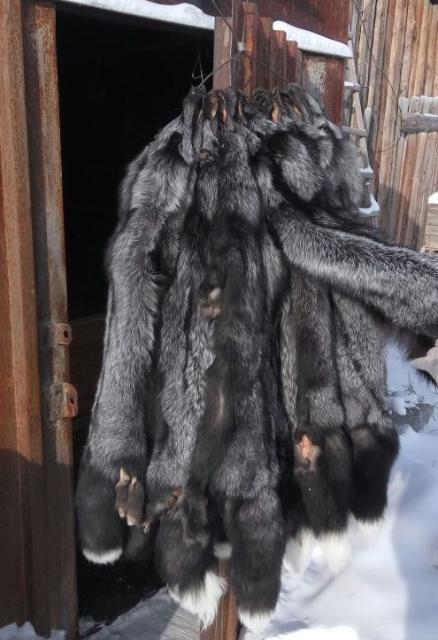 Продам шикарные якутские ШКУРКИ ЧЕРНОБУРКИ длиной 1 метр.  Отличный подарок дамам к 8 марта. Торопитесь, количество ограничено .Тел. 8914-2-755-800. Доп.тел. 89142622259