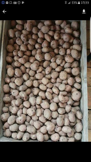 Продаю картофель семеной 1 мешок 2000 рублей