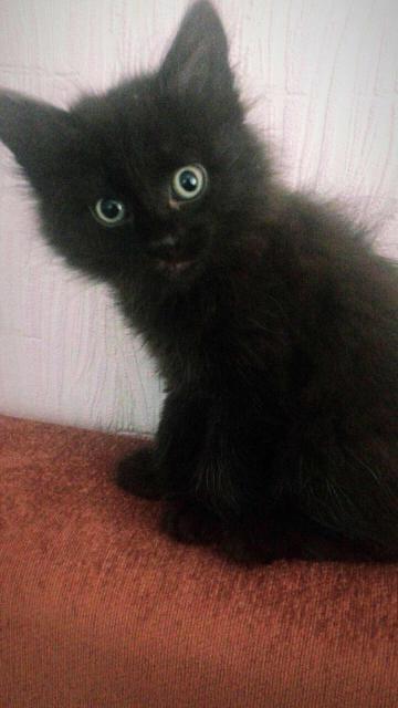 Замечательный котёнок-мальчик станет вашим другом.  Отдаётся вместе с лотком, мисками, игрушками.  Доставка.