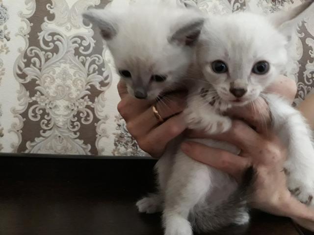 Отдам котят в добрые и заботливые руки 1 мес.  2 девочки и 2 мальчика