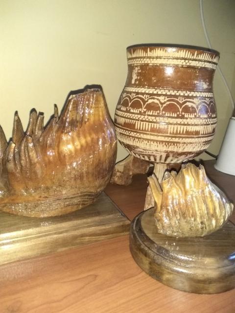 Зуб мамонта и Мамонтёнка шепа ребры позвонки