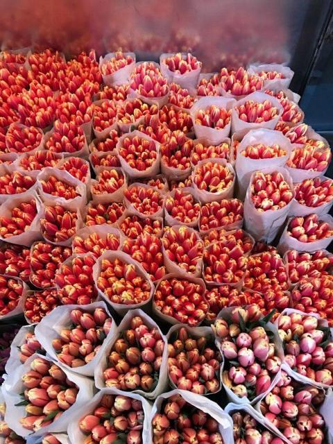 Принимаем заявки на тюльпаны к 8 марту. Цена с учетом доставки до Якутска. Будут в Якутска со 2 марта.