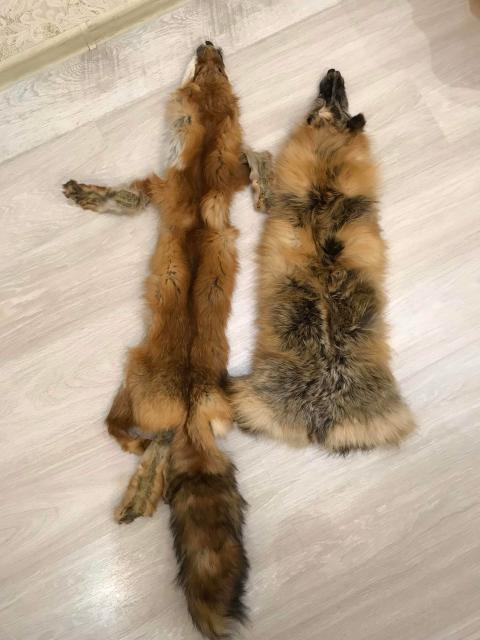 Продаю шкуры лисы 🦊 1 шт-2000₽ (торг)
