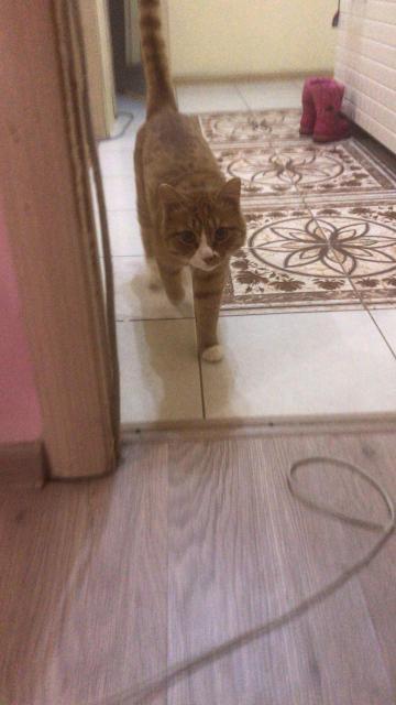 Кот мышелов с доставкой )))
