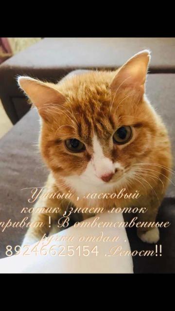 Кот мышелов привит знает лоток! Возможна доставка .