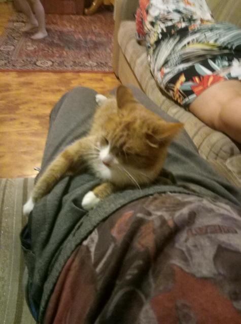 Отдам в добрые ласковые руки. Кошечку возраст 10 месяцев к латку приучина.