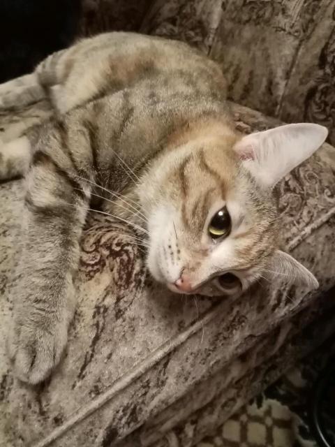 Котики и кошечки ищут любящих хозяев