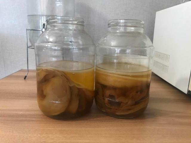 Продаю комбучу (чайный гриб) вместе с банкой и стартовой жидкостью. Уже готово к приготовлению самого полезного напитка👍🏻
