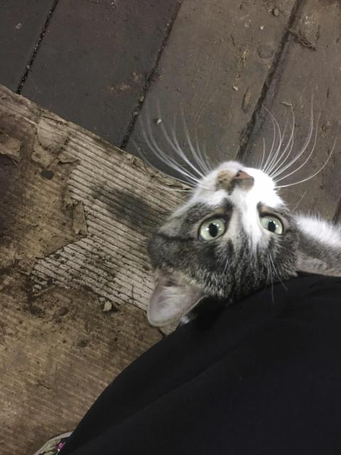 Отдаём молодую кошечку, живёт на передержке в гараже. Ловит мышей и птиц🐭🐦😼Стерелизована, кушает корма и дом. еду, к лотку приучена. Если приглянулась можем доставить