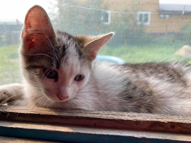 В добрые руки отдадим котят. Рыжий мальчик, белая девочка. Кушают все, к лотку приучены. Доставим