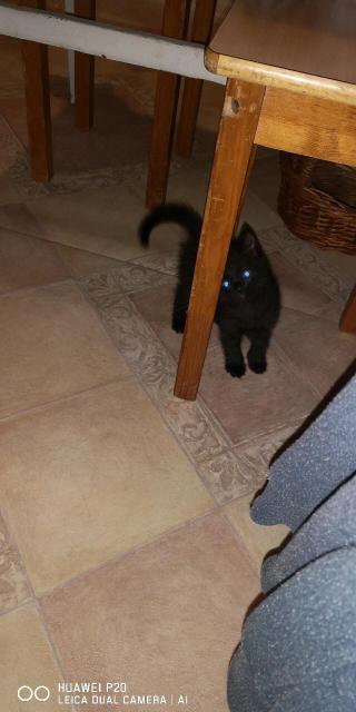 Отдам котёнка чертенка 😈к туалету приучин, ласковый