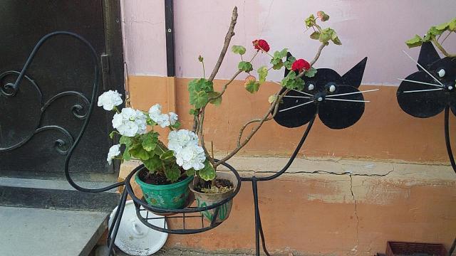 Продаю  кованную цветочницу Кошка.остаток 3шт.сделаны на заказ.подойдут для дачи.дома.