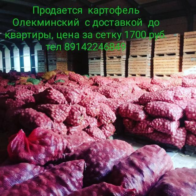 Продается картофель Олекминский,  доставка до квартиры