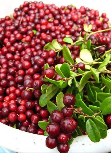 БРУСНИКА!!! Усть+Алданская,10л-ведро -2800,доставка бесплатно (((запаситесь на зиму от вирусов настоящим природным витамином С и многими другими витаминами,входящими в состав этой целебной ягоды)))