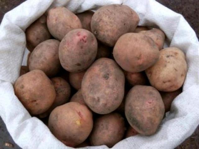Доставка местной,красной картошки. Доставка до квартиры бесплатно. Сетка 30 кг.