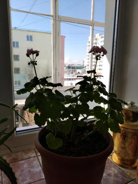 Розовый. Цена за два цветка.
