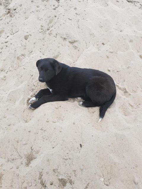 Крупный щенок 6 месяцев, девочка. Доставка