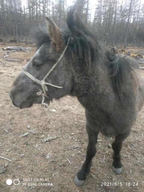 Меняю настоящую лошадь 2,5 года  на мото варианты