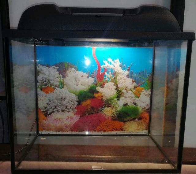 Продаю аквариум с объемом 25 литров. В комплект входят:фильтр, лампа для аквариума, элементы декора и грунт для аквариума, натуральный корм(мелкий мотыль)